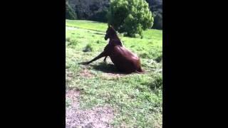getlinkyoutube.com-massive horse fart