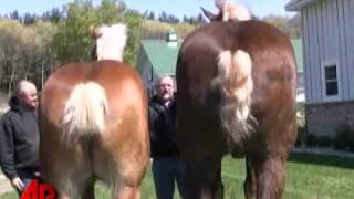 Horsing Around: Tall Horse, Tiny Horse