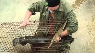 getlinkyoutube.com-Trapping TV Episode 11- Falling for Beaver