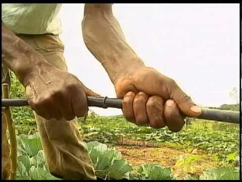 Reportagem - Série Conhecimento fala sobre irrigação