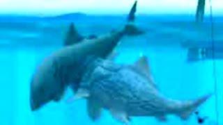 getlinkyoutube.com-Hungry Shark Evolution Big Daddy vs Megalodon - eating 6 Megalodons for Mega Feast Quest