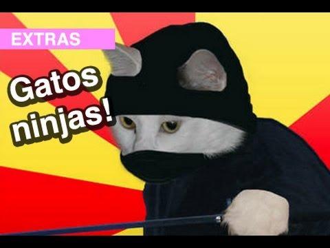 Gatos Ninjas! l WDF Extra