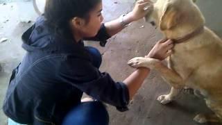 getlinkyoutube.com-หมาแสนรู้ หมูกรอบ... พูดเก่ง...บ่นเก่ง ภาค 1