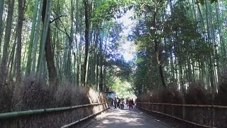 getlinkyoutube.com-4K 京都 嵯峨野の竹林小径を歩く(DJI Osmo+LS-14)