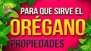 getlinkyoutube.com-Para Que Sirve El Te De Oregano - Propiedades, Beneficios Y Contraindicaciones Del Te De Oregano