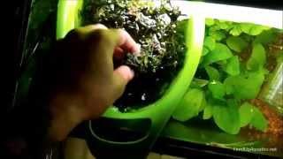 getlinkyoutube.com-A tip to grow out Moss