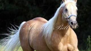 getlinkyoutube.com-Amarillo Bill - Cavalo Quarto de Milha