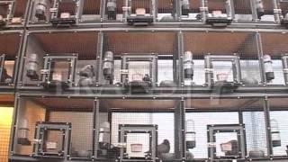 getlinkyoutube.com-Merpati Hias di Dunia Binatang Trans7 (Naff Pigeon Loft)