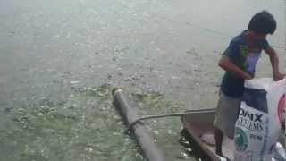 getlinkyoutube.com-LeAf  - Tilapia Farm