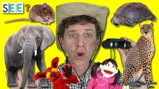 getlinkyoutube.com-What Do You See? Song with Matt   Describing Wild Animals   I See a Big Elephant   Learn English