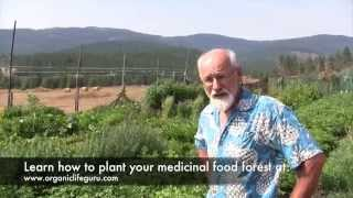 getlinkyoutube.com-Tour a Food Forest 4 Months After Planting | Full Course at Organic Life Guru