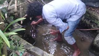 getlinkyoutube.com-Big fish monster cat fish hunt in kerala