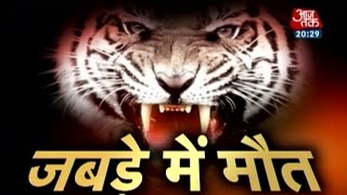 Uncut video of white tiger mauling youth in Delhi zoo