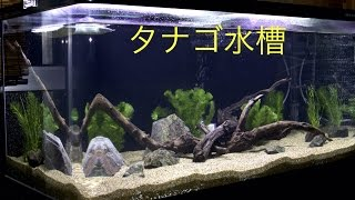 getlinkyoutube.com-90cm タナゴ水槽 #1 水槽の立ち上げ【日淡水槽】Aquarium Setup