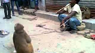 getlinkyoutube.com-azamgarh video by sameer and tipu