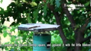 getlinkyoutube.com-Пчеловодство малых форм   Toy-Scale Beekeeping