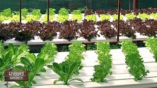 getlinkyoutube.com-เกษตร Society 28/10/57 : โจรสลัดฟาร์ม สวนผักไฮโดรโปนิกส์กลางกรุง