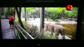 ലക്ഷ്മി നായരെ കടുവ കണ്ടപ്പോൾ 🤭 ഒരു സമ്മാനം കൊടുത്തു||A tiger gives a gift to lekshmi nair veryfunny width=