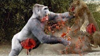 getlinkyoutube.com-10 СУМАСШЕДШИХ БИТВ ЖИВОТНЫХ СНЯТЫХ НА КАМЕРУ   Лев,Буйвол,Крокодил,Слон,Медведь