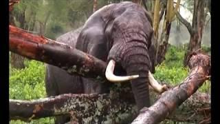 Kwaya ya mt.Yuda Thadei Rc Njombe - Siri ya Uumbaji