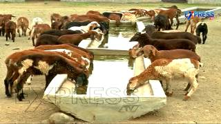 getlinkyoutube.com-Commercial Sheep Farming By Jangi Reddy, Ranga Reddy District | Express TV