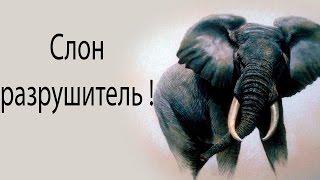 Слон разрушитель ! ( Elephant in the Room )