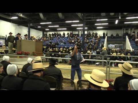 Pennsylvania Draft Horse Sale 2014