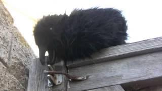 getlinkyoutube.com-Real Raven Problem Solving