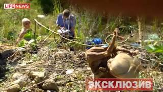 getlinkyoutube.com-248 мертвых младенцев нашли в лесу