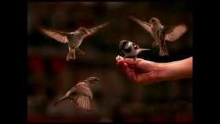 Sanskrit song : Chataka Chataka... on a sparrow
