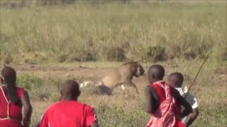 getlinkyoutube.com-Lion vs Maasai, Amboseli National Park, Safari Kenya 2015
