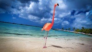 getlinkyoutube.com-Aruba: 19 Miles of Happiness - 4K   DEVINSUPERTRAMP
