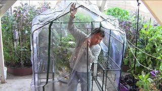 getlinkyoutube.com-How to Build a $17.50 Greenhouse Without Any Tools