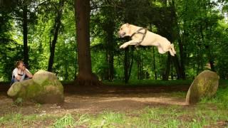 getlinkyoutube.com-TreT - Parkour Dog From Ukraine