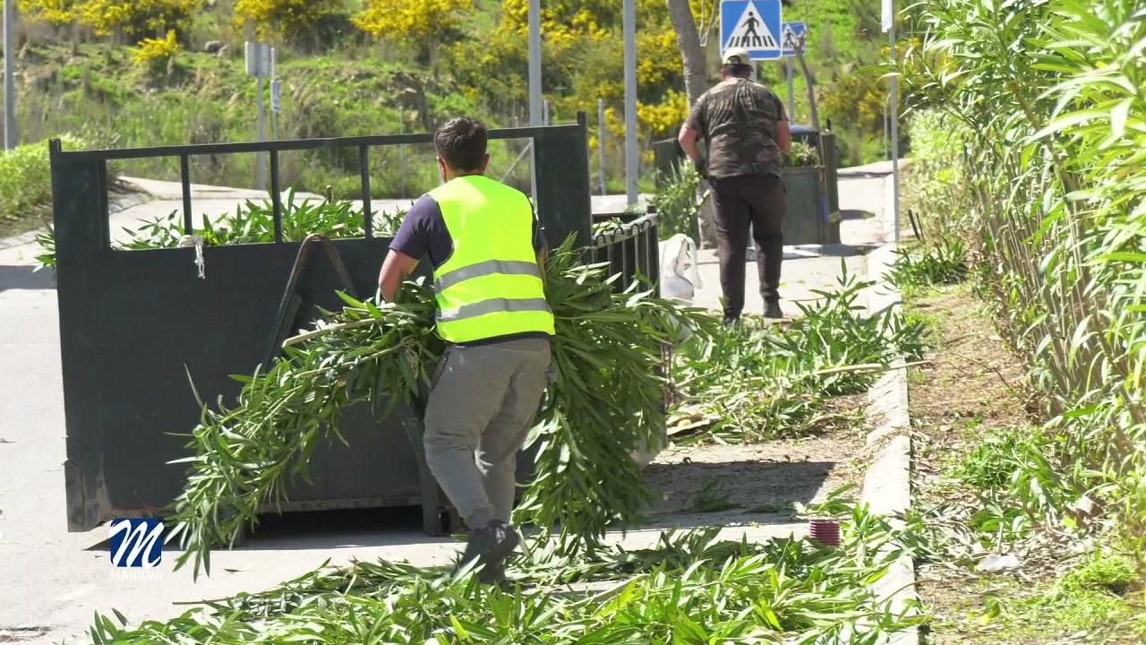 Trabajos de poda y desbroce en el polígono industrial