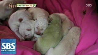 getlinkyoutube.com-녹색견 출생의 비밀 @TV동물농장 140406