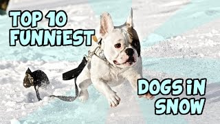 getlinkyoutube.com-TOP 10 FUNNIEST DOGS IN SNOW OF ALL TIME