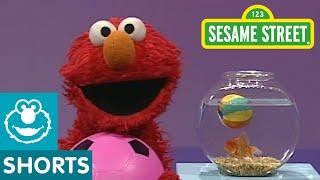 Sesame Street: Elmo's World: Play Ball! width=
