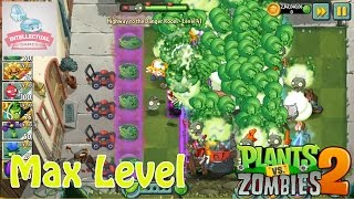 getlinkyoutube.com-Cabbage Pult Max Level 20 - HTTDR L41 - Plants vs Zombies 2