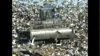 getlinkyoutube.com-The Fresh Kills Story: From World's Largest Garbage Dump to a World-Class Park