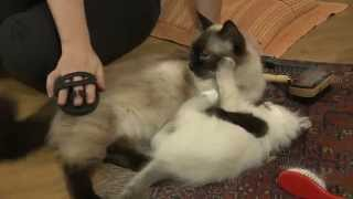 Fellpflege bei Katzen - Tolle Tipps für Zuhause