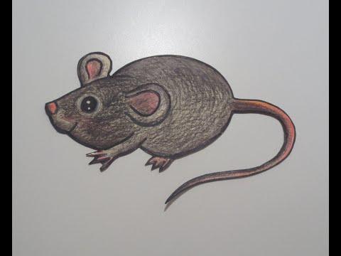 كيف تتخلص من الفئران  ?