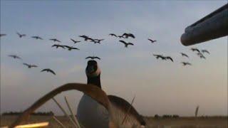 getlinkyoutube.com-Waterfowl Hunting Recap 2013