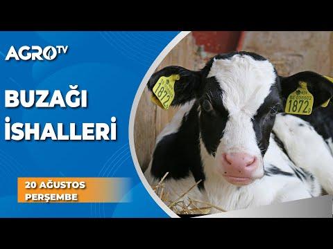 Buzağı İshalleri ve Su Kaybı / AGRO TV