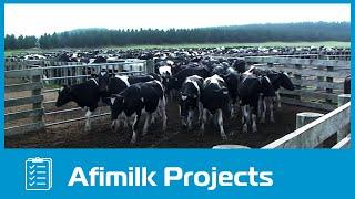 getlinkyoutube.com-afimilk® - The world's largest dairy farm project in Vietnam
