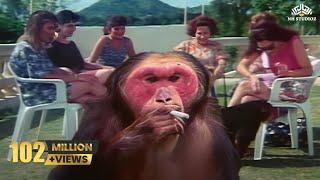 Funny-Pets-Comedy-Scene-Kundan-Movie width=