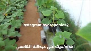 الزراعة المائية باستخدام التغذية بالاسماك الاكيوبونك