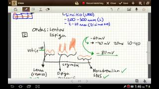 getlinkyoutube.com-(parte 2) Fisiologia del sistema digestivo