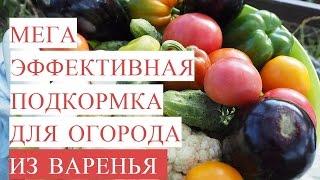 Мегаэффективная подкормка для огорода из ВАРЕНЬЯ! Байкал из Варенья!