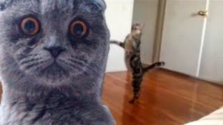 """getlinkyoutube.com-Epic Funny Cats - Compilation Part Two """"The Cat Strikes Back!"""""""